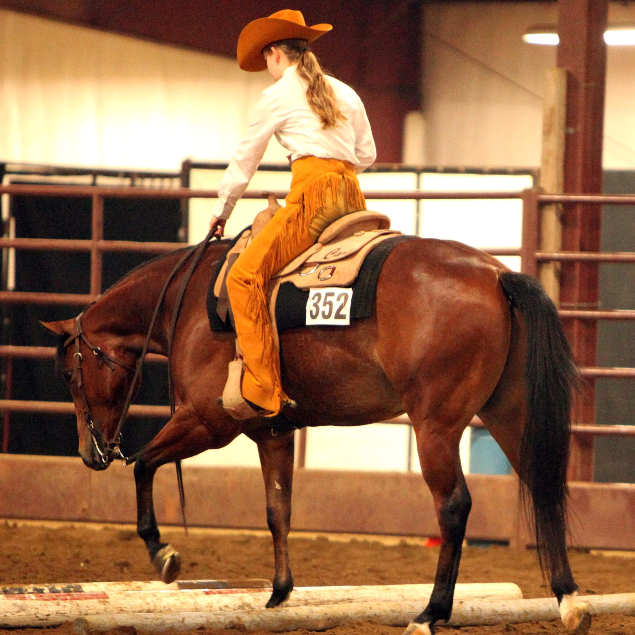 Gohorseshow Ranch Riding Does Style And Breeding Matter Gohorseshow